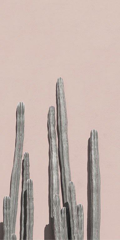 Banner-attrium-home-cactus
